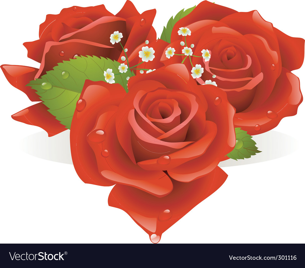 Three roses vector