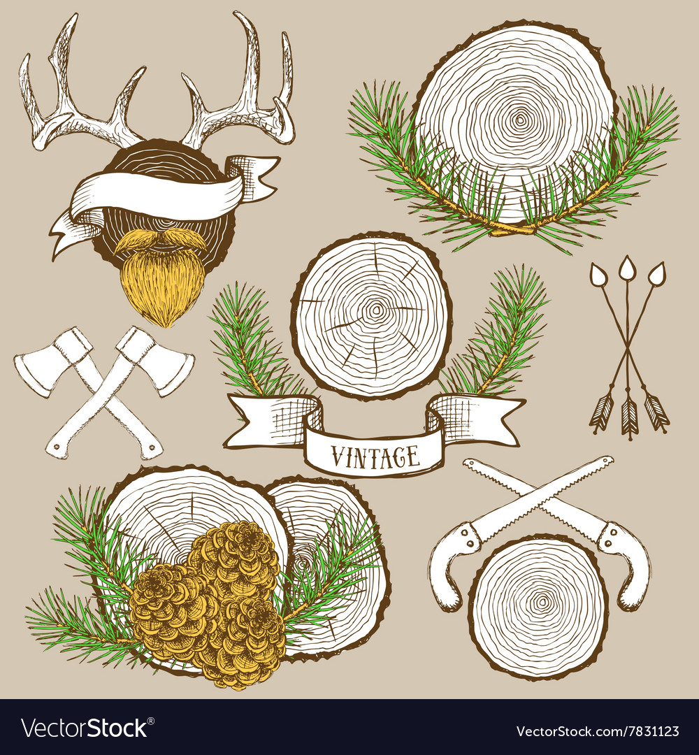 Pine branches and cones with tree rings vector
