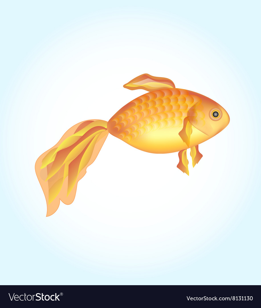 One goldfish golden fish on a light background vector
