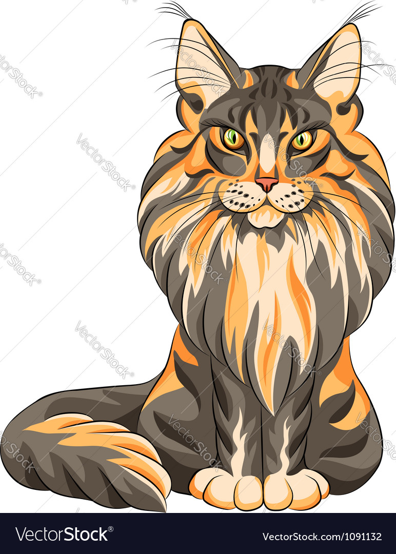 Serios black and red cat maine coon vector