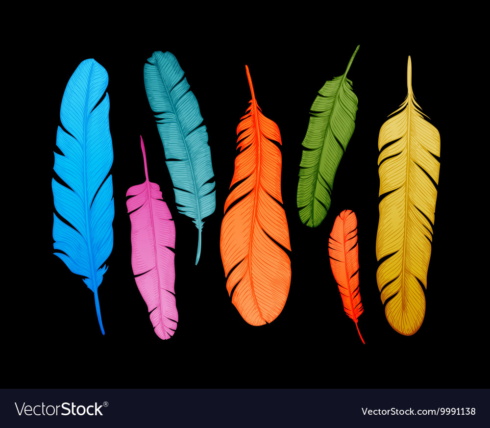 Decorative set feathers hand drawn vintage vector