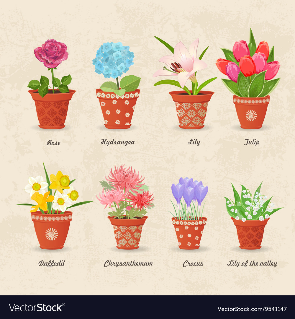 Vintage collection of planted different lovely vector