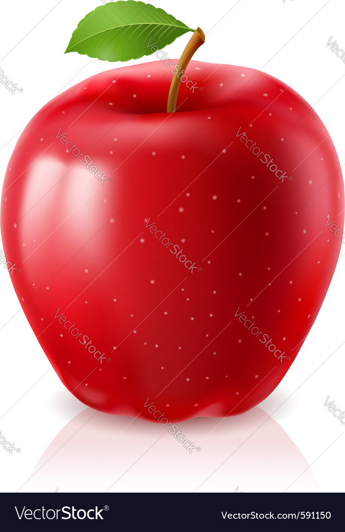 Ripe red apple vector