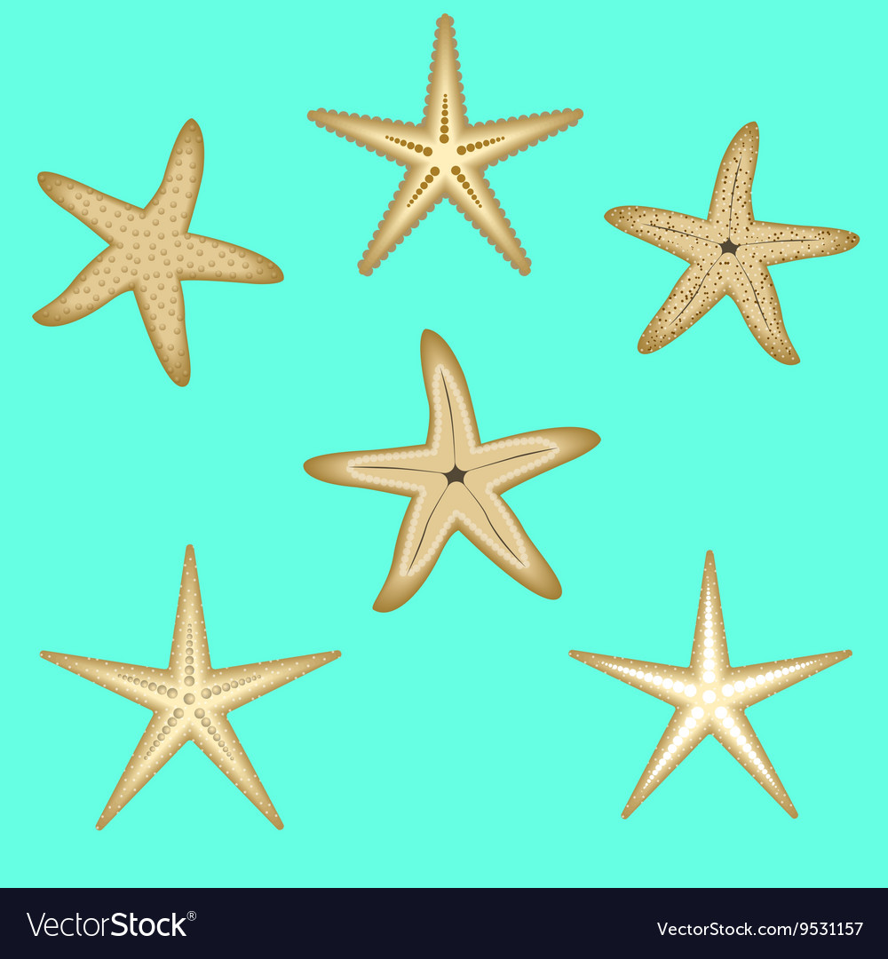 Starfish a set of six options vector