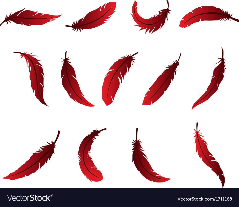 Beautiful feather design for logo vector