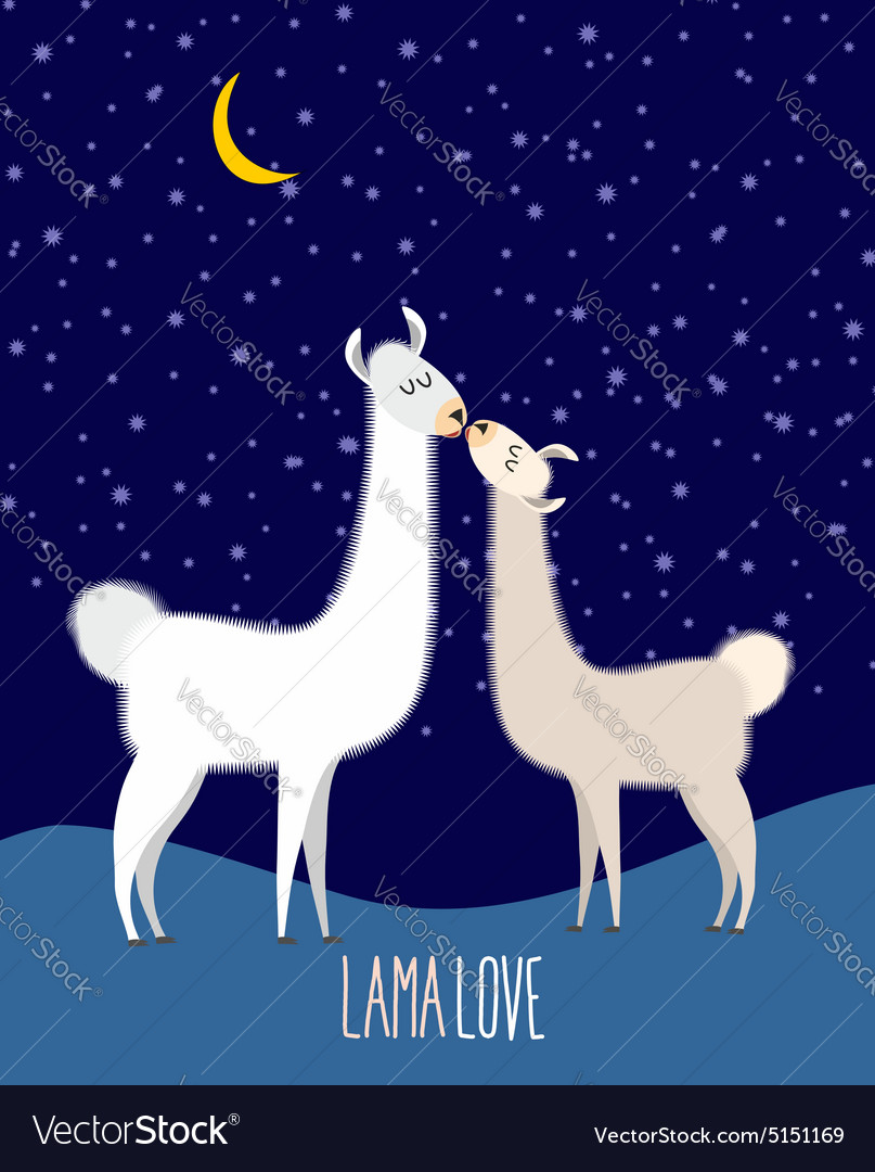 Llama alpaca two cute llama kiss at night under vector