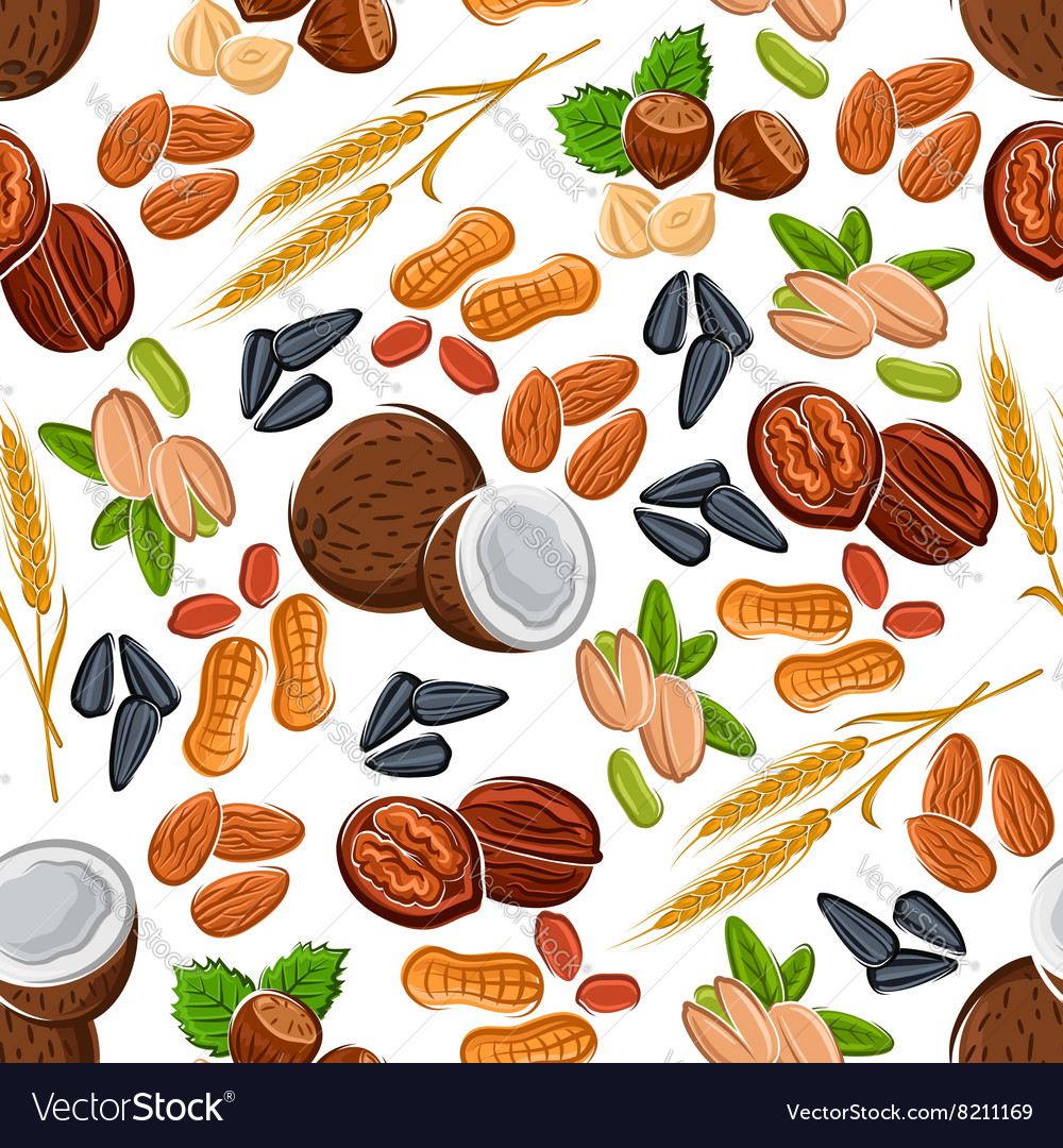 Nuts seeds legumes and cereal pattern vector