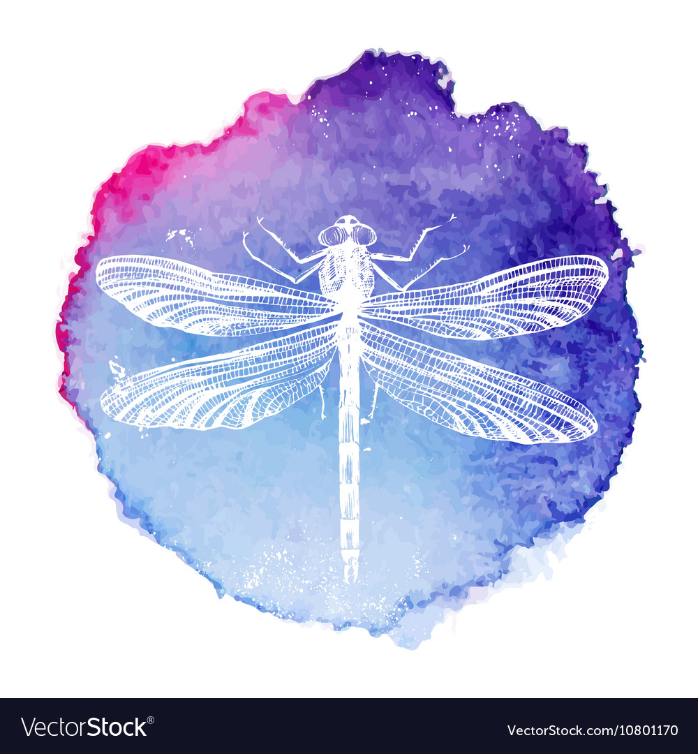 Hand drawn dragonfly on watercolor background vector