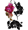 orchid vector image