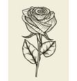 Rose Hand drawn artwork vector image