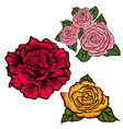 flower set with redorange and pink roses vector image