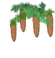 Spruce branch with cones vector image vector image
