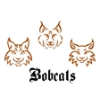 Bobcats and lynxs vector image vector image