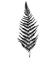 Fern silhouette Isolated on white background vector image