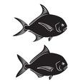 Pomfret Fish vector image