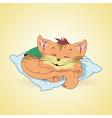 cat5 vector image