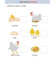 chicken workbook vector image