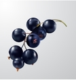 Watercolor fruit black currant isolated vector image