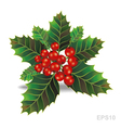 Beautiful holly christmas branch vector image