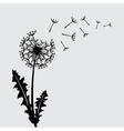 Blow dandelion background vector image