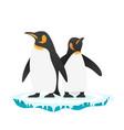 penguins vector image