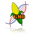Genetically modified corn vector image