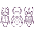 Set of 3 Beetle Bugs Insect Outline Hand Drawn vector image