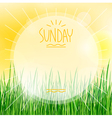 sunny background with green grass vector image