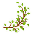 summer branch of tree and green leaves seasonal vector image