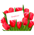Red tulips and blank of card vector image