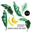 banana leaves and fruit isolated vector image