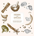 spices banner card hand draw sketch vector image