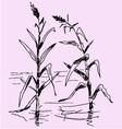 reeds pond vector image