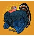 Poultry Turkey realistic vector image