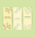 collection herbal banner vector image