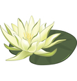 Water Lilies vector image