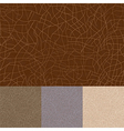 Skin texture set vector image vector image