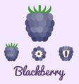 Blackberry flat design vector image