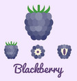 Blackberry flat design vector image