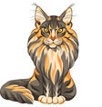 serios black and red cat Maine Coon vector image
