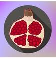 pomegranate icon flat design vector image