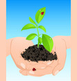 young green plant in hands vector image