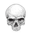 Dotwork Skull vector image vector image