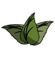 leaves plant isolated vector image