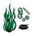 spirulina seaweed hand drawn  isolated vector image