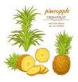 pineapple set vector image