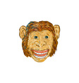 Chimpanzee Head Front Isolated vector image