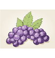Sketch drawing of grapes vector image