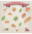 autumn leaves viburnum berries chestnuts and vector image
