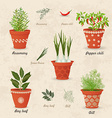 vintage collection of different herbs planted in vector image vector image